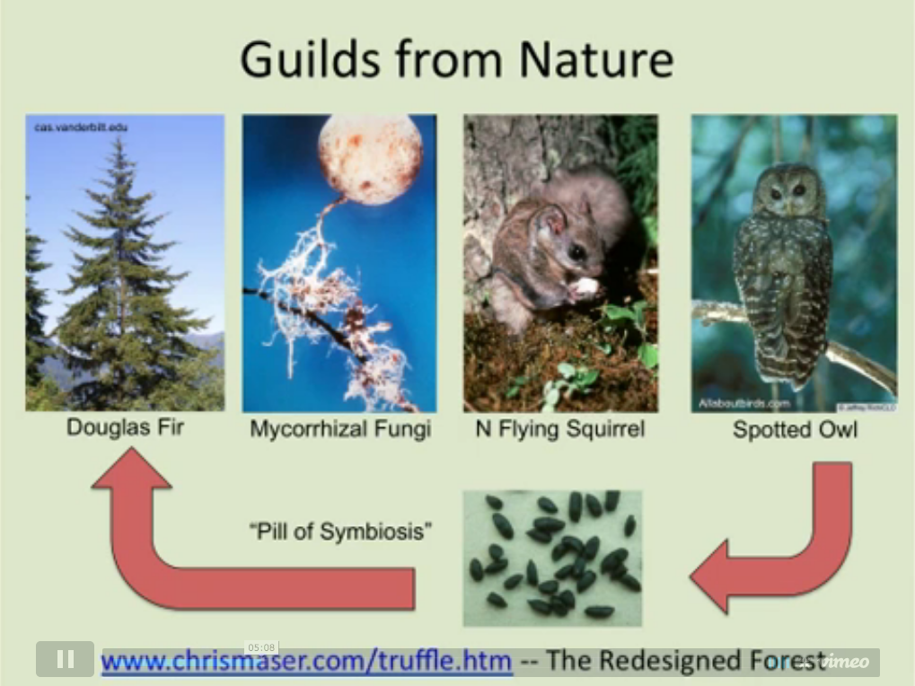 spotted owl flying squirrel truffle symbiosis Book review chanterelle the squirrel is a major source of food for the northern spotted owl symbiotic connections to hemlock trees, and northern flying.