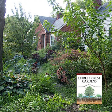 Gardening Like the Forest: Dave Jacke Workshops in Auburn, NY