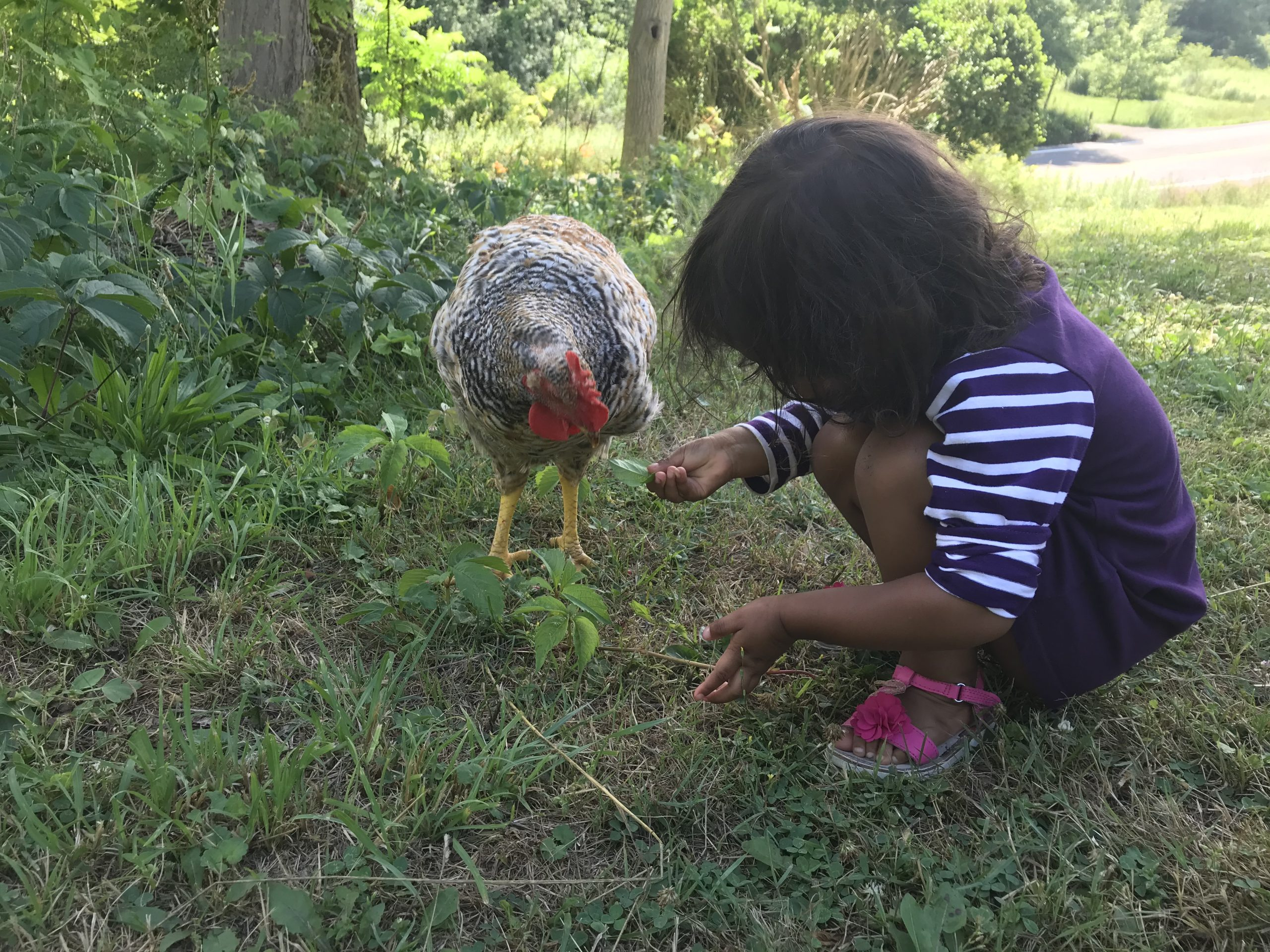 Community Food Systems with The Learning Farm