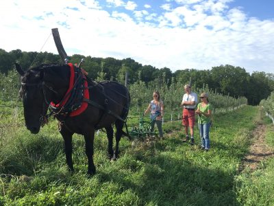 Melissa Madden, co-owner of the Good Life Farm offered a skill share on Draft Horse Teamster Work in her orchard.